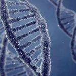 Genes provide clues to gender disparity in human hearts