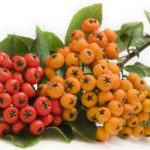 Little-Known Medicinal Plants and Herbs