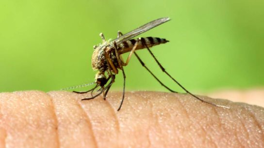Mosquitoes and Diseases