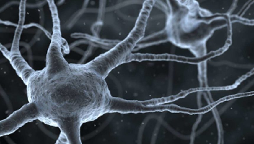 Ordinary Skin Cells Morphed into Functional Brain Cells