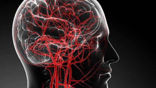 blood flow in the brain