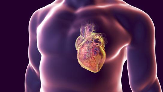 human heart artwork