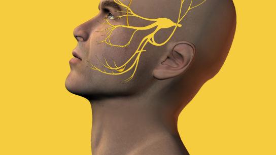 Trigeminal nerve in man
